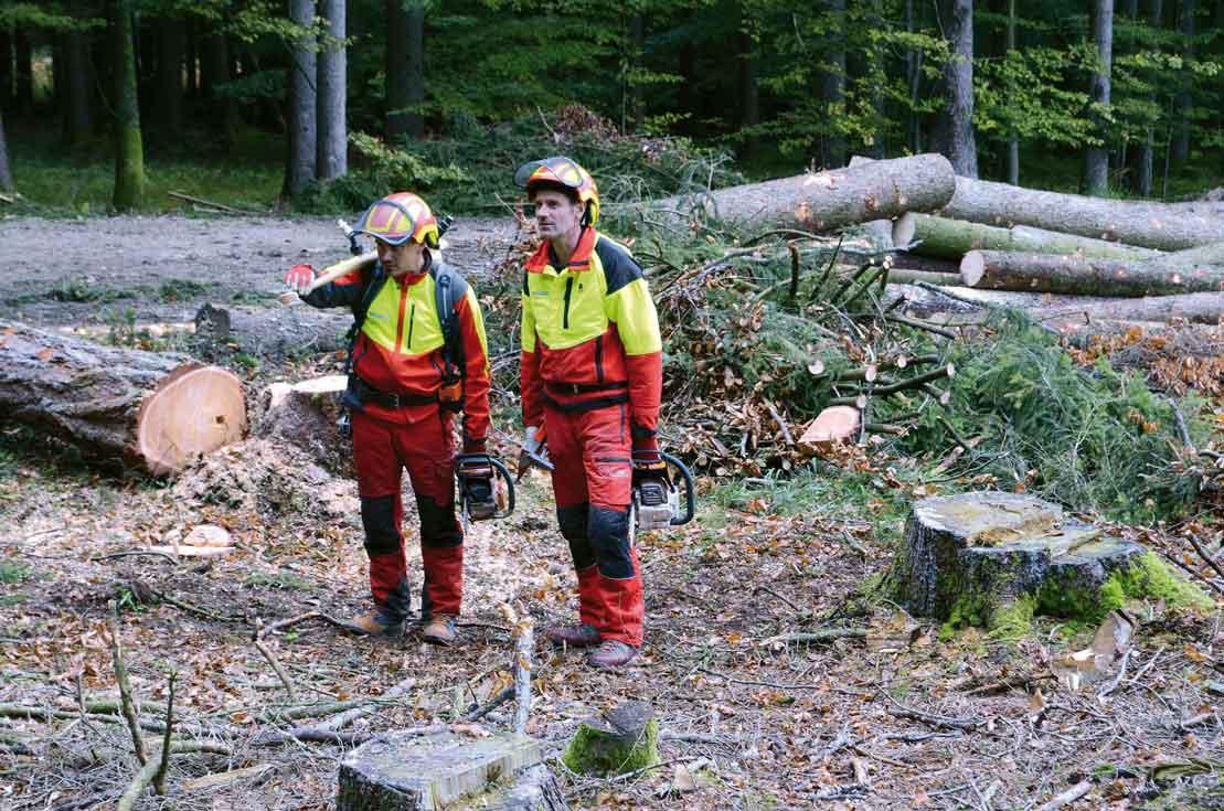 Wald ist ein wichtiger Beitrag zum Klimaschutz. Daher schreibt das Lebensministerium einen Preis für Gemeinden aus, die auf nachhaltige Waldbewirtschaftung setzen. ©Bundesforschungszentrum für den Wald