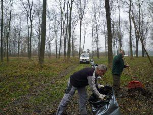 Im Wald werden Blätter von befallenen Bäumen für den Resistenztest gesammelt. ©Unger