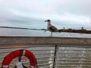Finnlands Hauptstadt Helsinki liegt direkt am Meer. ©Gemeindebund